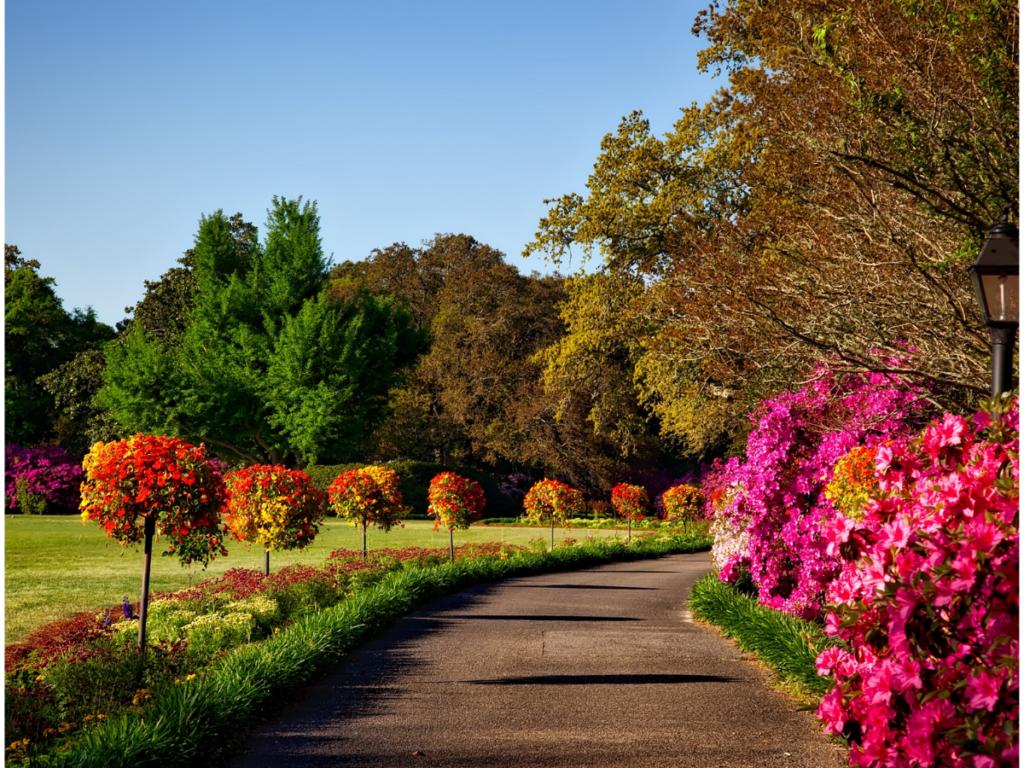 Colourful Gardening